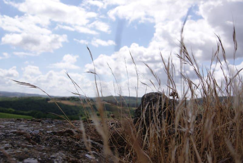 在天空的谷物 库存照片
