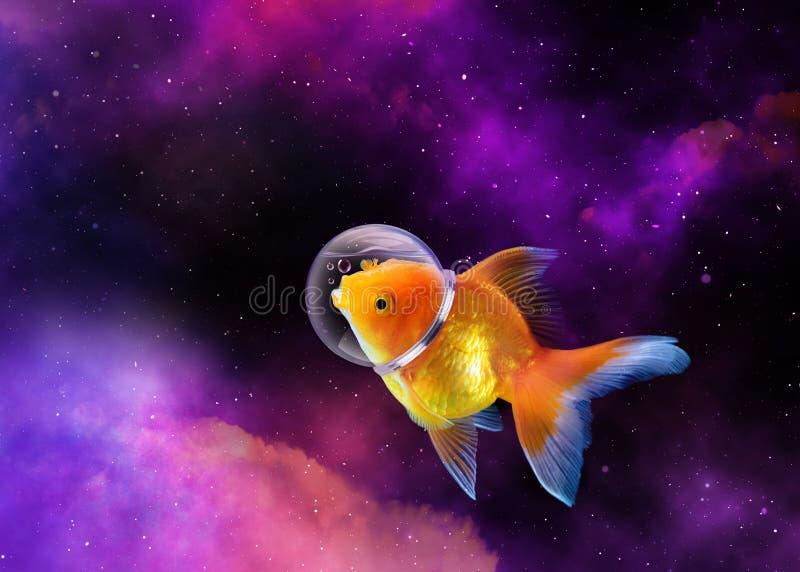 在天空的金鱼与宇航员帽子,金在星系空间的鱼游泳,混合画法 神秘故事,幻想,童话当中 图库摄影
