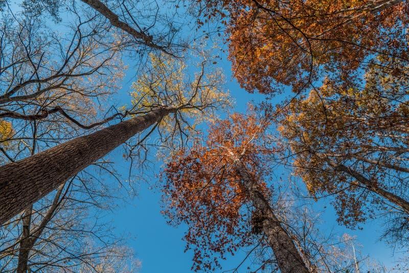 在天空的高大的树木 免版税库存图片