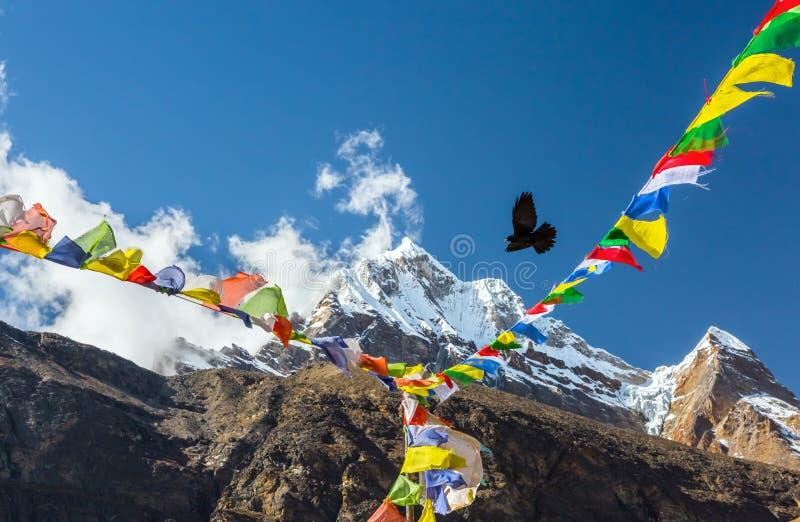 在天空的鸟飞行在尼泊尔祷告旗子之间在喜马拉雅山 免版税库存照片