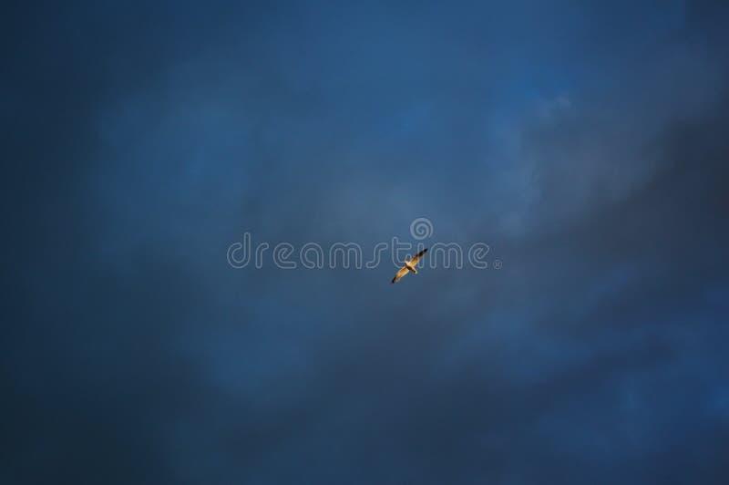 在天空的鸟 免版税库存照片