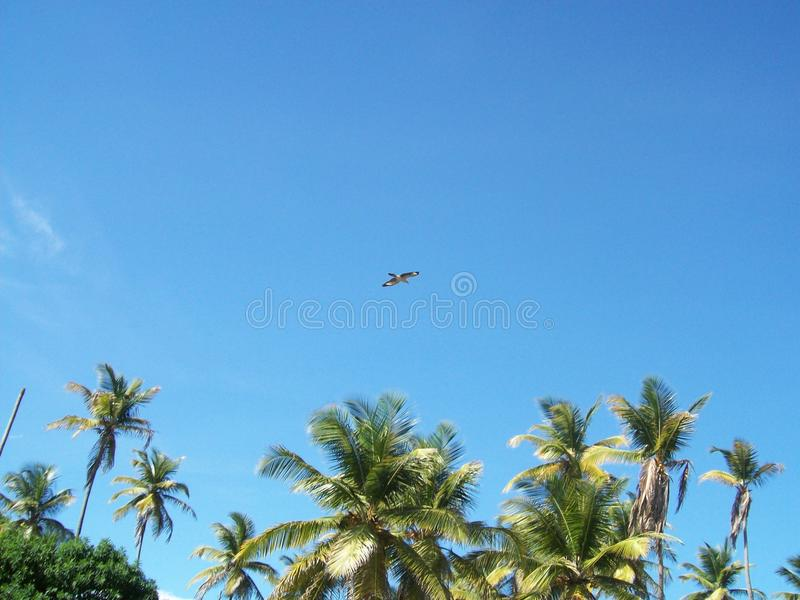 在天空的鸟 库存照片