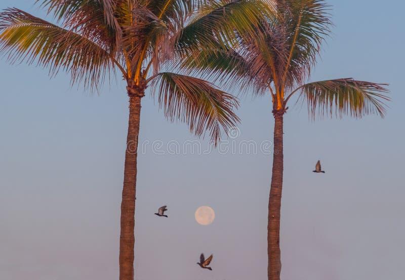 Download 在天空的满月在日出 库存照片. 图片 包括有 充分, 天空, 掌上型计算机, 月亮, 飞行, 斜面, 海鸥 - 72371926