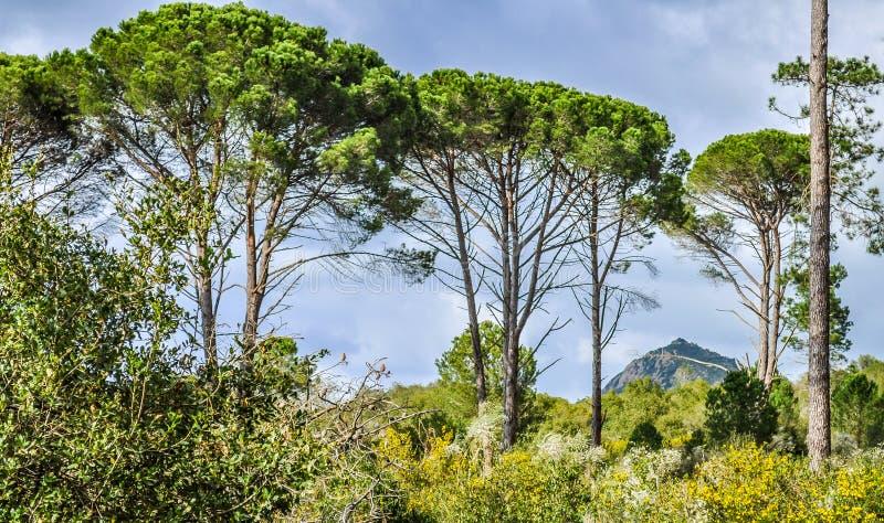 在天空的绿色树 免版税库存图片