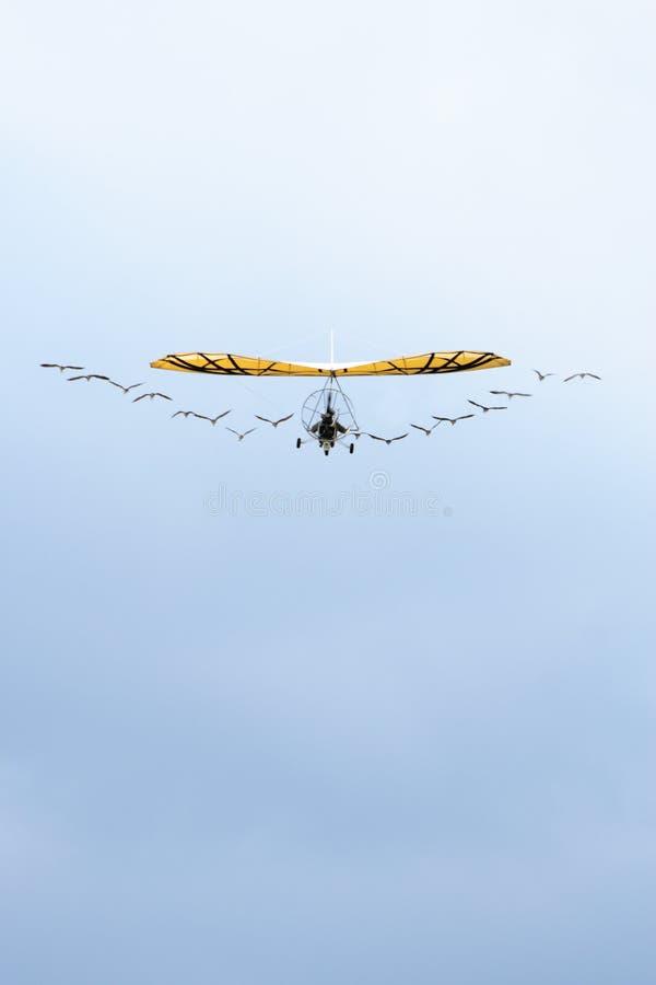 在天空的Ulm和鸟 免版税库存照片