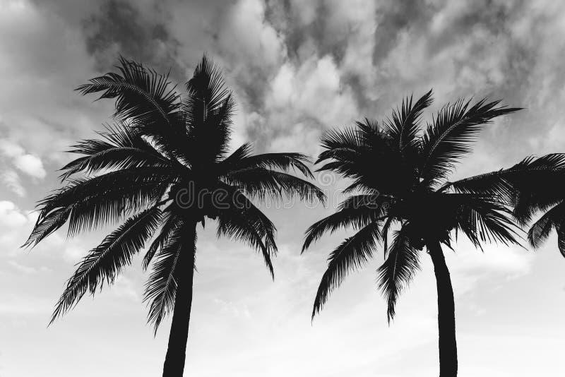 在天空背景与海滩,黑白摄影的椰子 库存照片