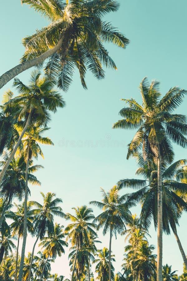 在天空背景的可可椰子树 低角度视图 被定调子的图象 库存图片