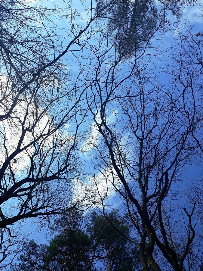 在天空背景的树枝 库存照片