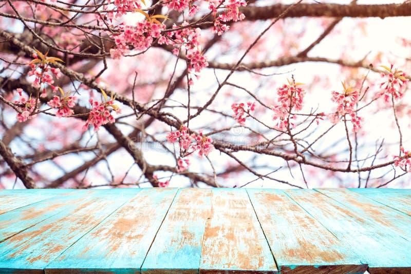 在天空背景的桃红色樱花花佐仓在春季 免版税库存照片