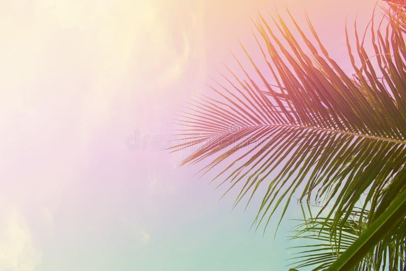 在天空背景的棕榈树叶子 在天空的棕榈叶 桃红色和黄色定了调子照片 库存照片