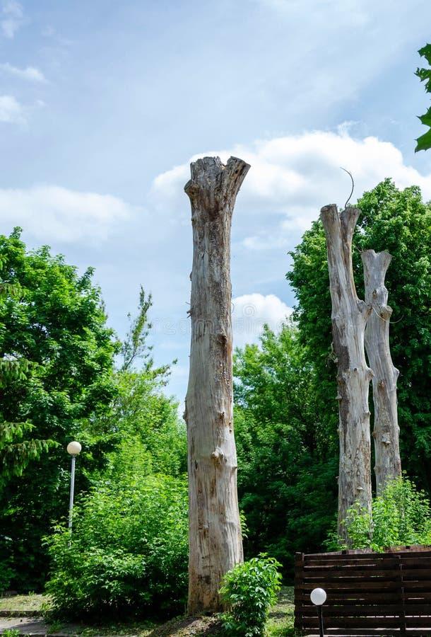 在天空背景的老和死的树 库存照片