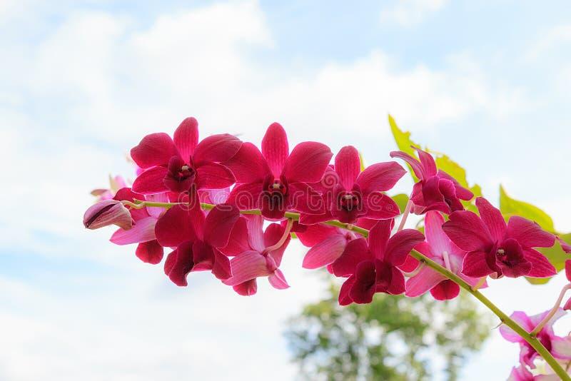 在天空背景的紫罗兰色兰花花 免版税库存照片