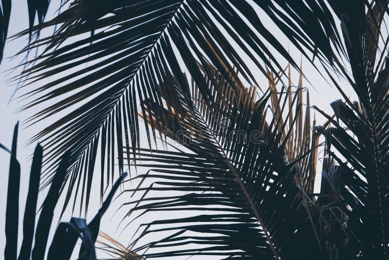 在天空背景的绿色棕榈叶 棕榈叶背景 热带自然葡萄酒印刷品或海报 免版税库存图片