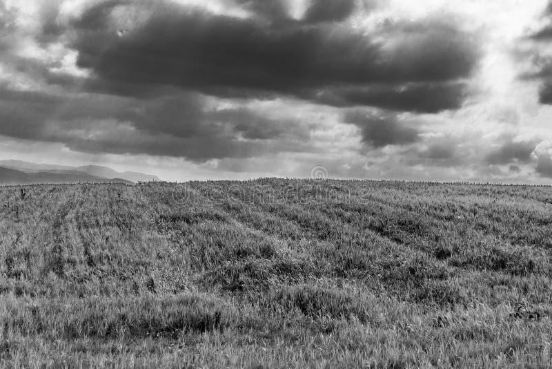 在天空背景,在天际的天空蔚蓝,春天绿草的风景绿草 库存照片