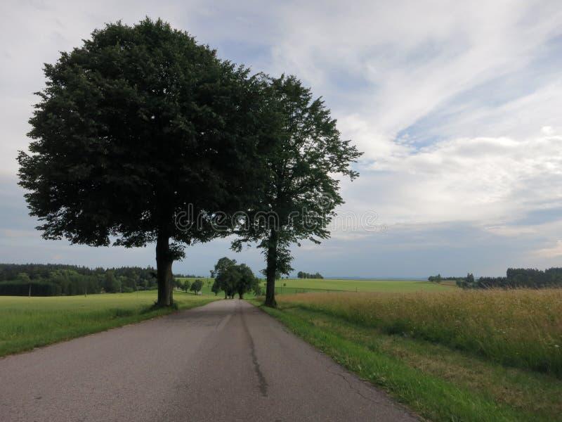 在天空蔚蓝的两棵树 免版税库存图片