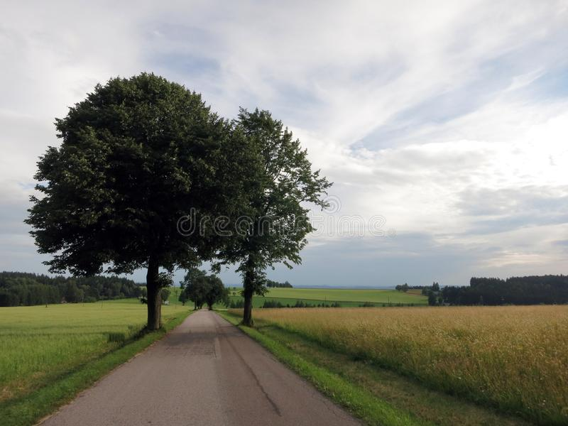 在天空蔚蓝的两棵树 免版税库存照片