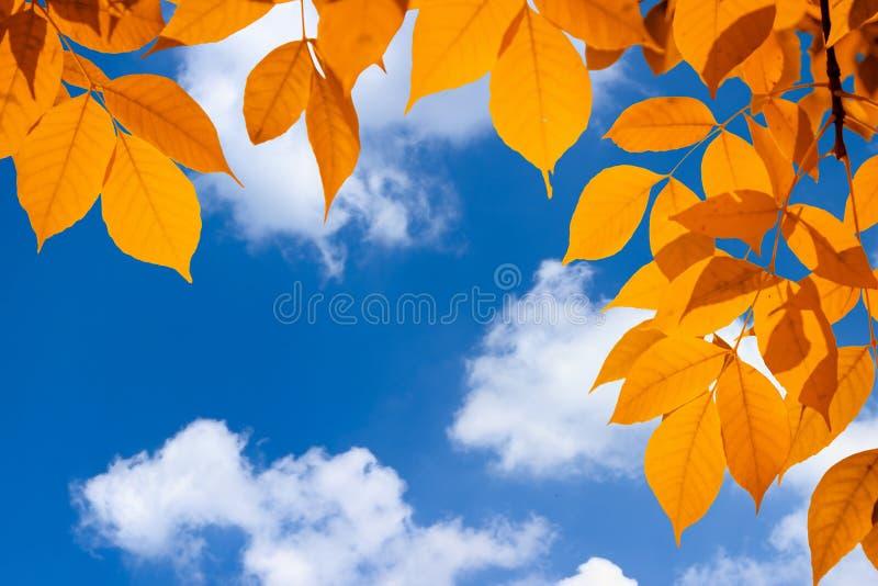 在天空蔚蓝的秋天橙色生动的叶子与云彩 免版税库存图片