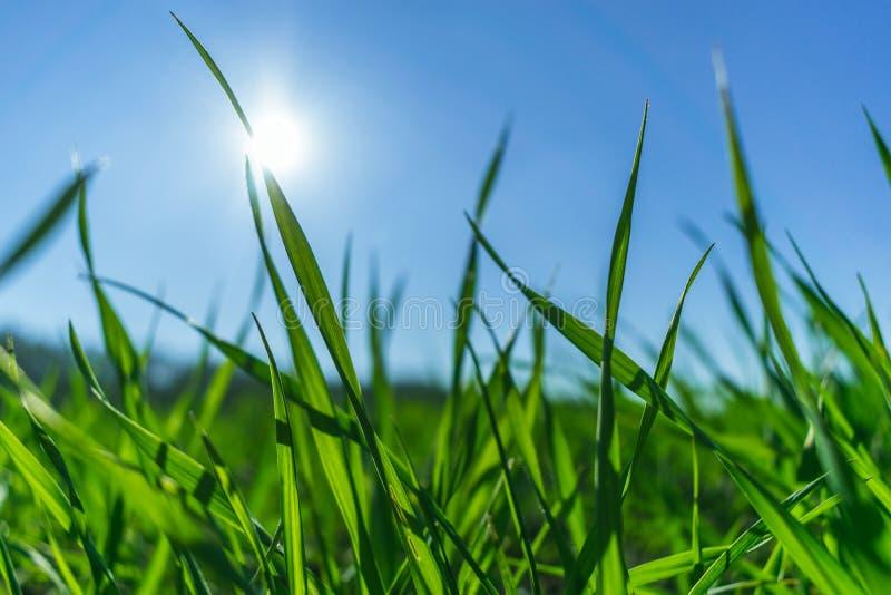 在天空蔚蓝的绿草 免版税库存照片