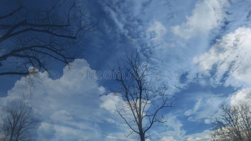 在天空蔚蓝背景的光秃的不生叶的树剪影 用白色云彩盖的天空蔚蓝 免版税库存照片