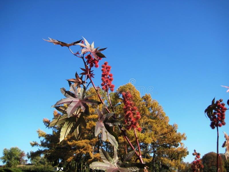 在天空蔚蓝背景的高园林植物铸工 库存图片