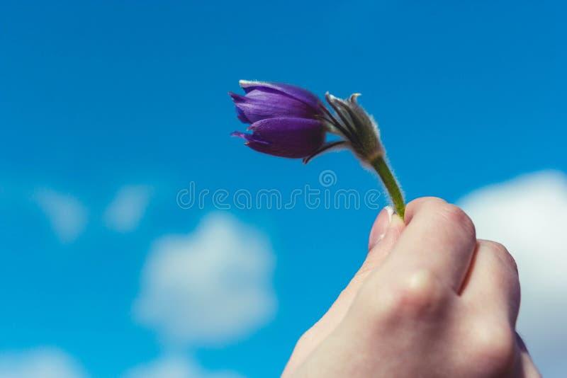 在天空蔚蓝背景的Snowdrop 免版税库存照片