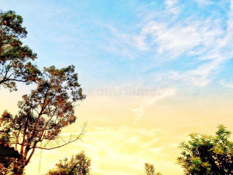 在天空蔚蓝fron的树  库存图片