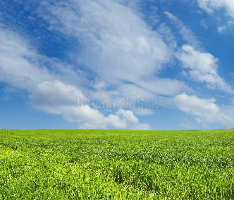 在天空麦子的蓝色域 免版税库存照片