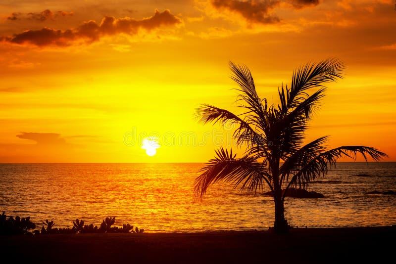 在天空neary海海洋海滩的美丽的剪影可可椰子树在日落或日出时间的休闲旅行和假期 免版税库存图片