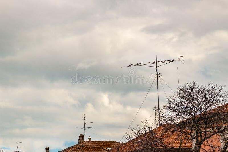 在天线栖息的鸽子 库存照片