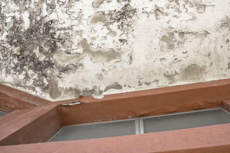 在天花板的模子和湿气积累 免版税库存图片