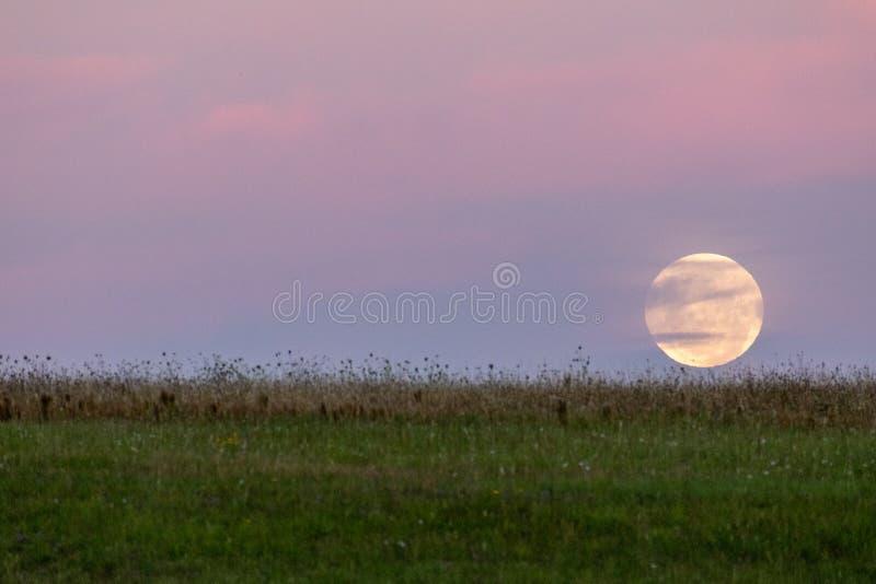 在天际的满月在草甸后 库存图片