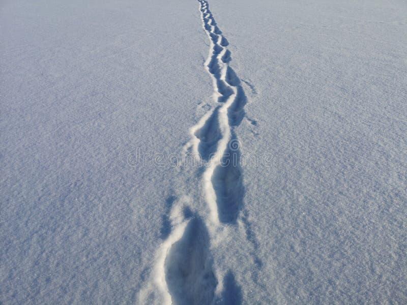 在天鹅绒雪的脚印在一晴朗,冷淡的1月天 免版税库存照片