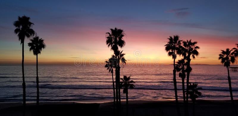 在太平洋的棕榈树日落的 库存图片