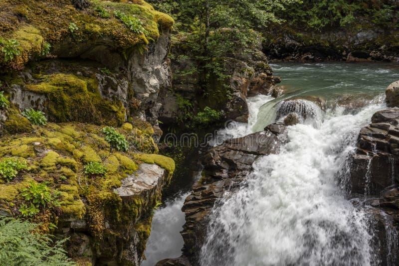 在太平洋西北地区1的瀑布 库存照片