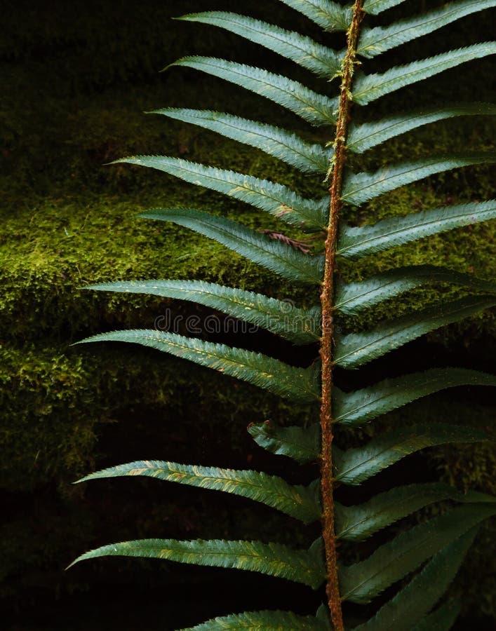 在太平洋西北地区的深绿色 库存照片