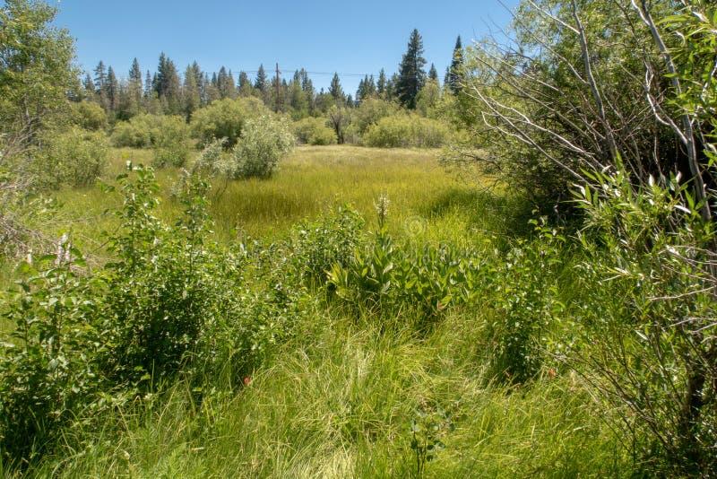 在太浩湖附近的一个蔓延的草甸 图库摄影