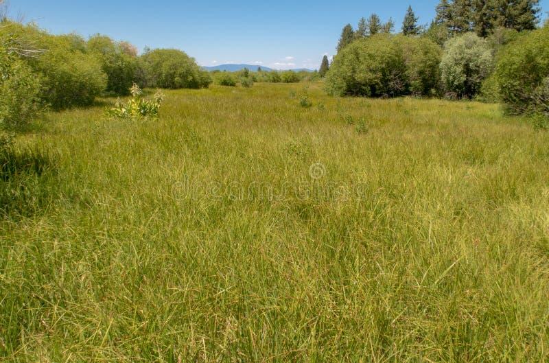 在太浩湖附近的一个蔓延的草甸 免版税库存照片