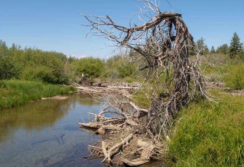 在太浩湖附近的一条小河 库存照片