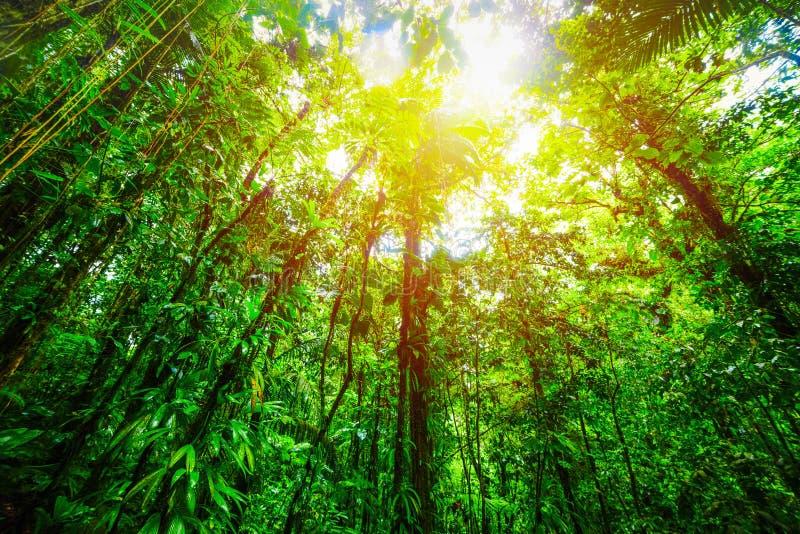 在太阳下的高绿色树在巴斯特尔密林 库存图片