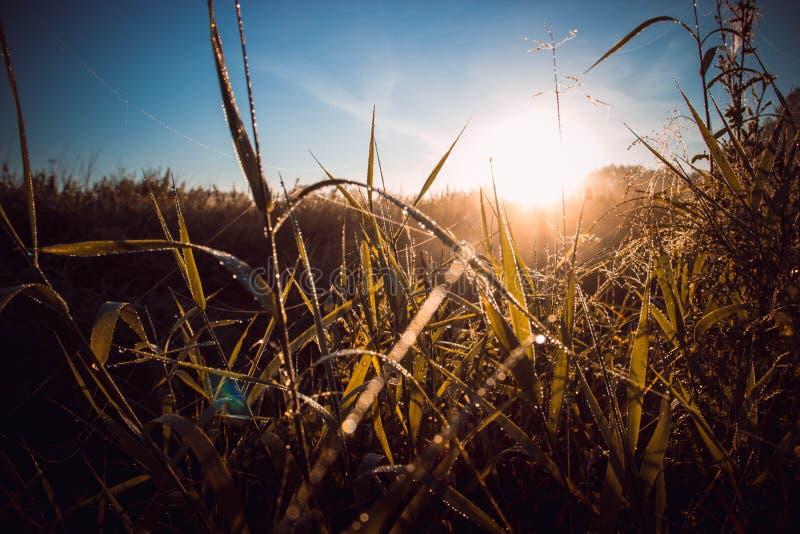 在太阳光芒的草 库存图片