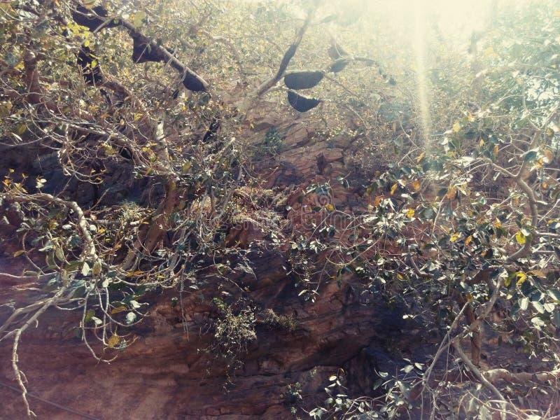 在太阳光芒的蜂 免版税库存图片