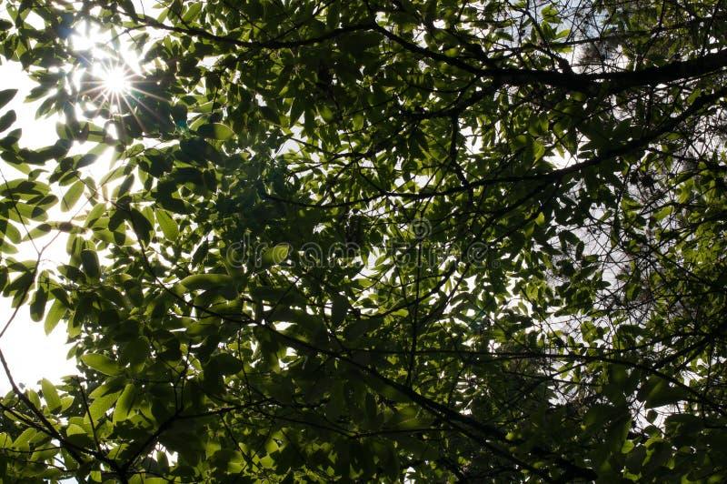 在太阳的树荫下 库存图片