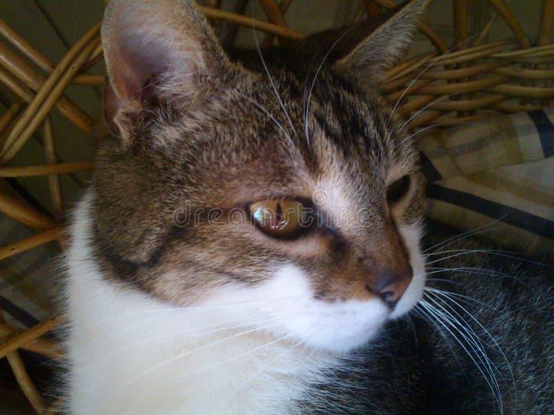 在太阳的猫在一把藤椅 库存照片