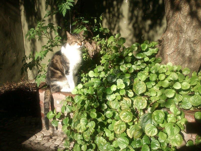 在太阳的猫在植物和树 免版税图库摄影
