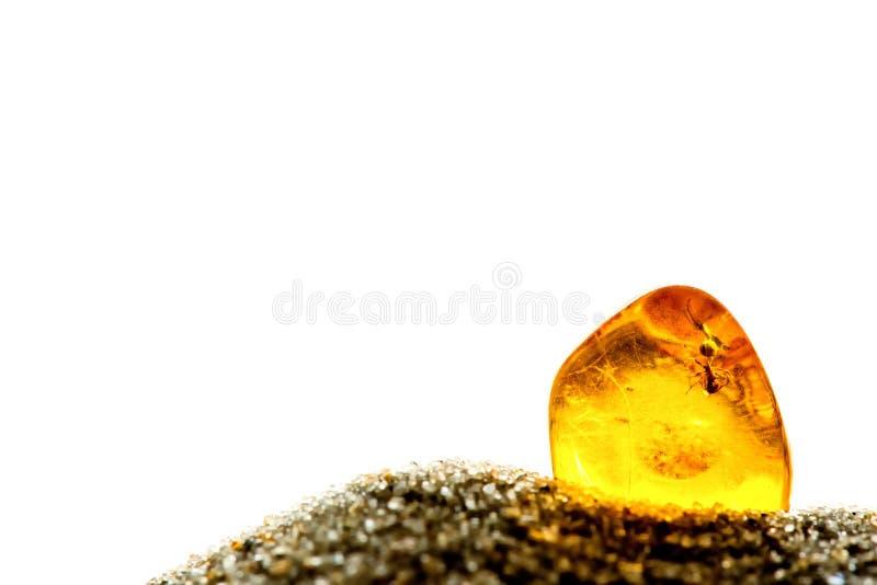在太阳的琥珀与嵌入蚂蚁 库存照片