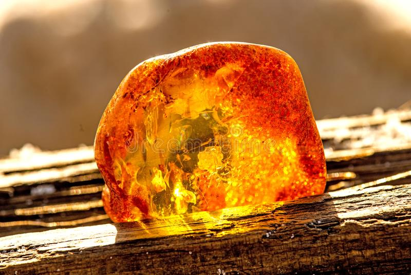 在太阳的琥珀 免版税库存图片