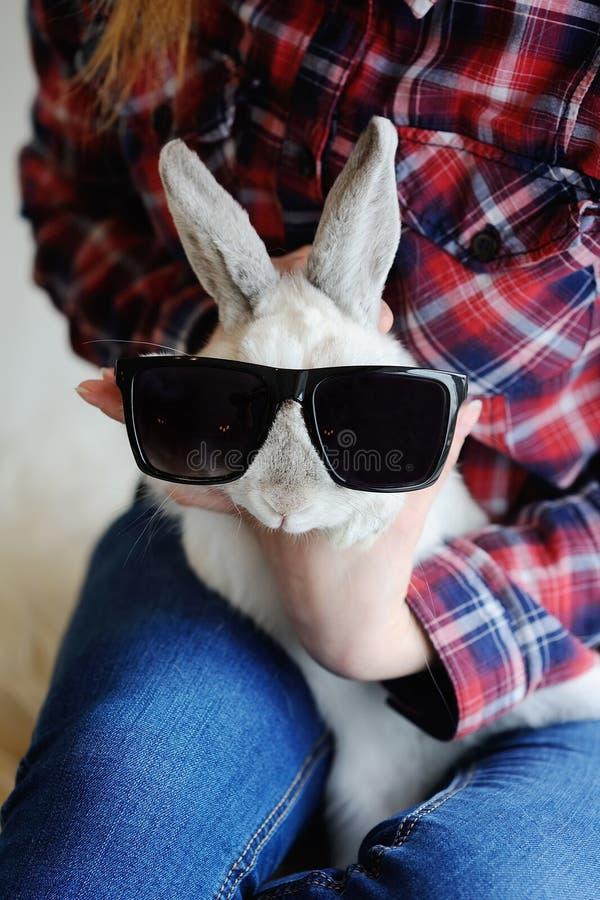 在太阳镜的兔子 免版税库存照片