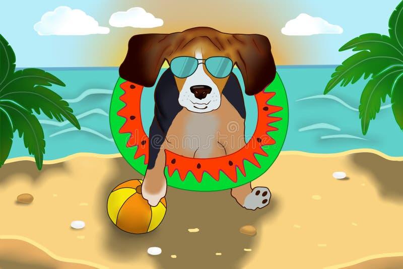 在太阳镜的小猎犬在海滩 免版税库存图片