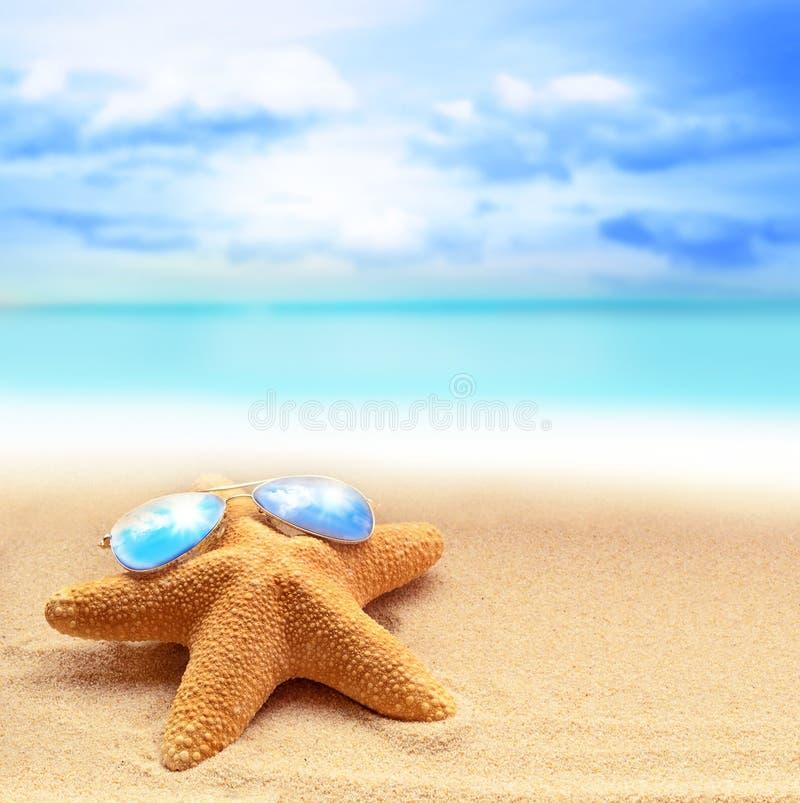 在太阳镜的海星在一个沙滩 库存照片