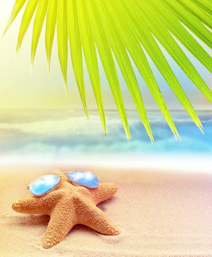 在太阳镜的海星在沙滩和棕榈叶 免版税库存图片